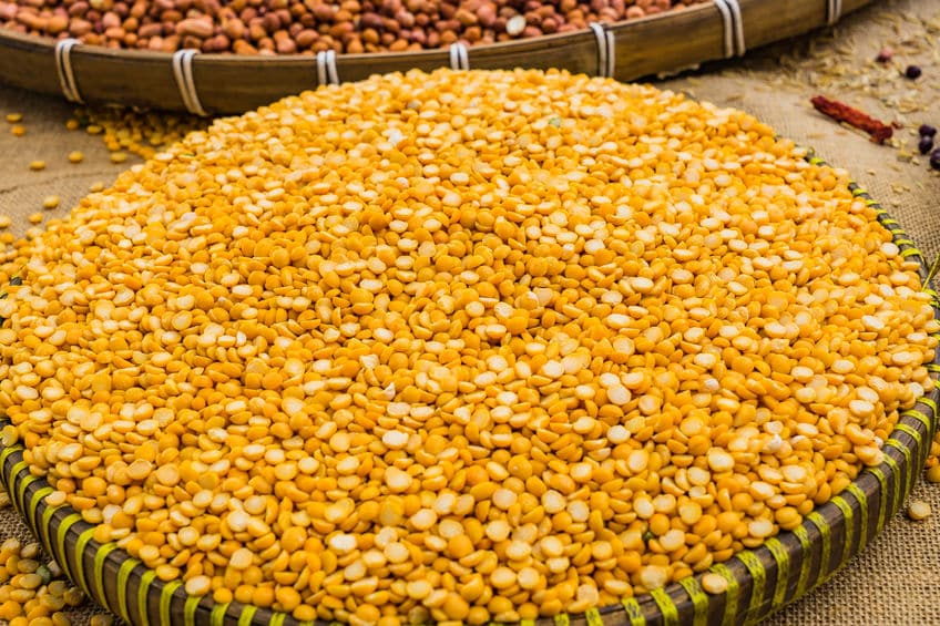 proteines de pois bio jaune - protéines végétales bio alternutrition