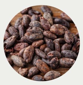 Cacao bio et équitable